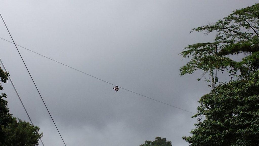 Zip lining in Costa Rica.